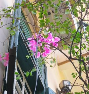 Hoa giấy bên khung cửa sổ ^^