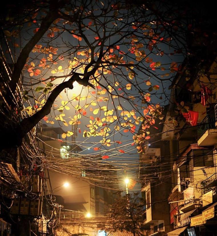 Thu Hà Nội về đêm dịu dàng trên những con đường ngập ánh đèn vàng nâu- Hình ảnh mang tính chất minh họa ( nguồn: Hà Nội Phố)